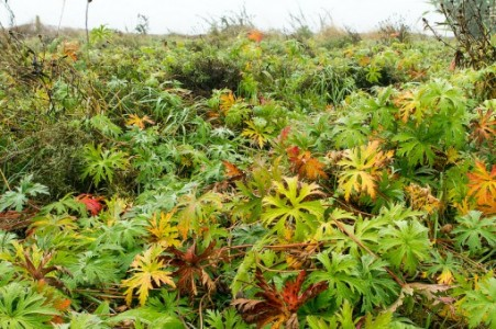 tall-herbs